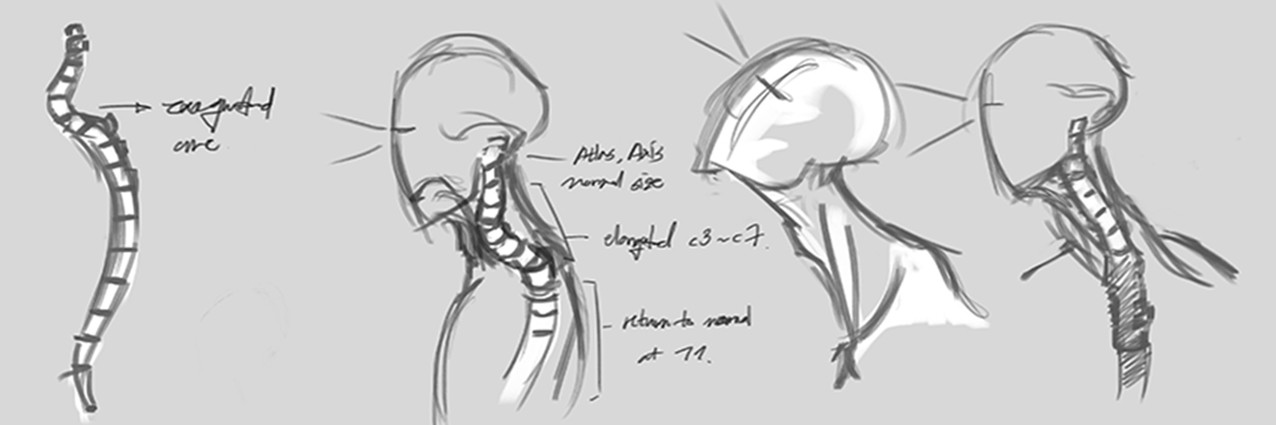 Sketch: Neck Movement