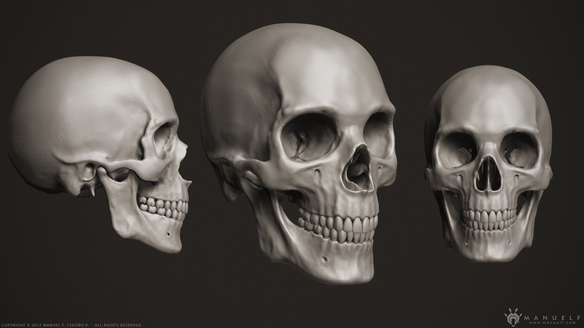 ArtStation - 3D Human Skeleton, Manuel F  Cedeño