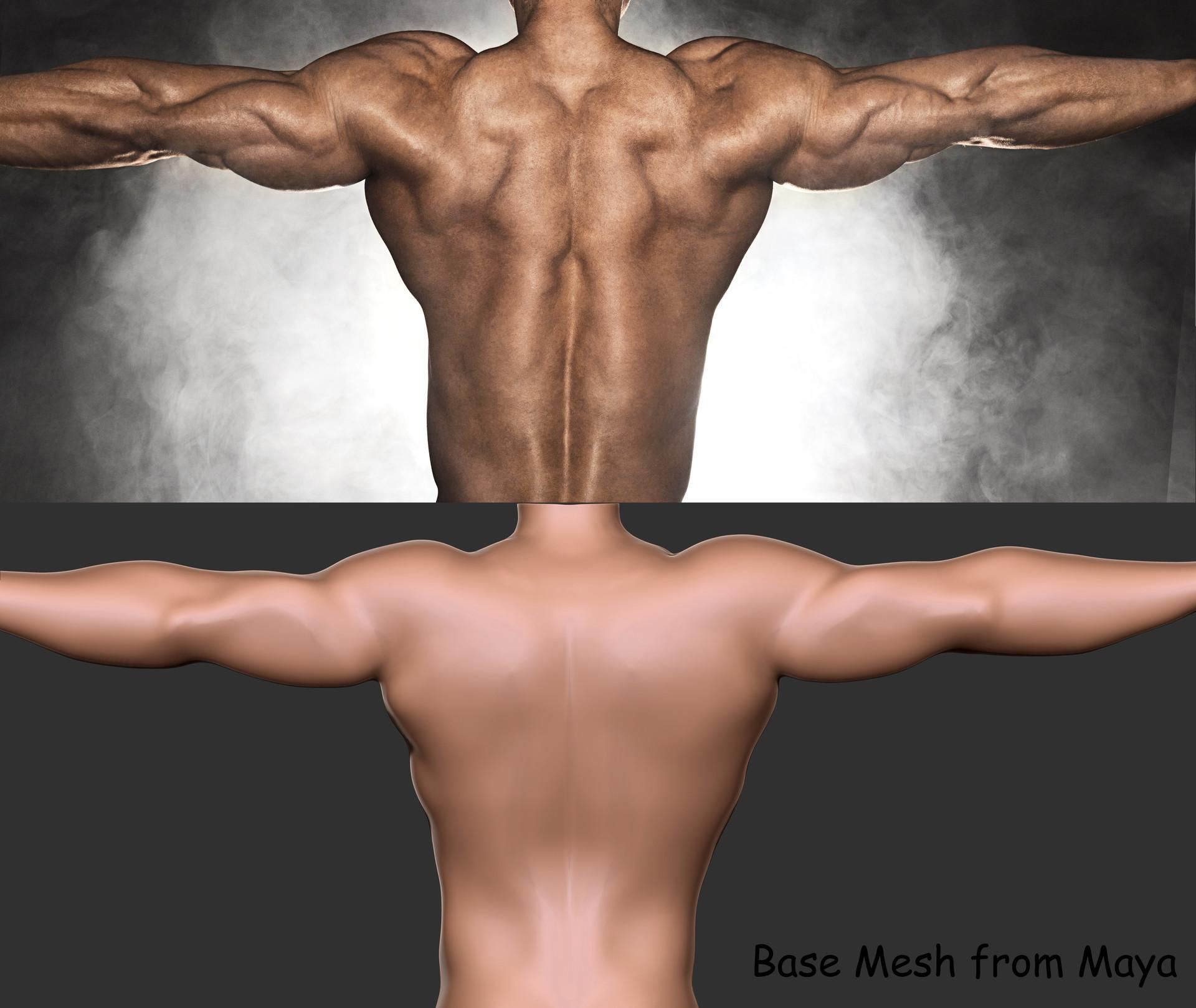 Artstation Back Muscles Anatomy 01 Shiv Swain