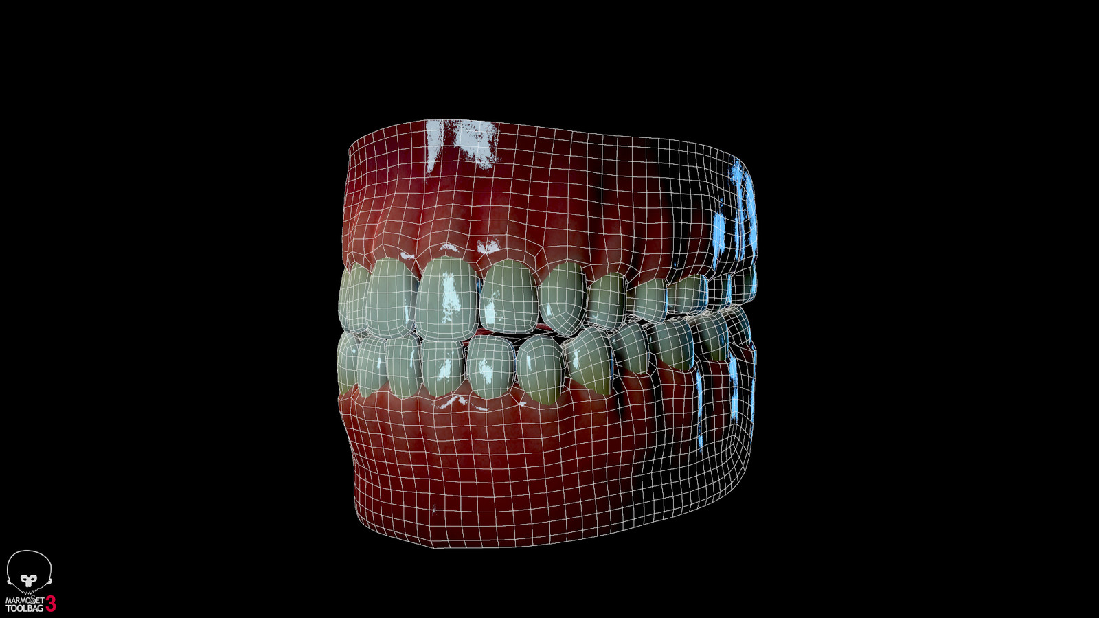 Teeth Model/Wireframe