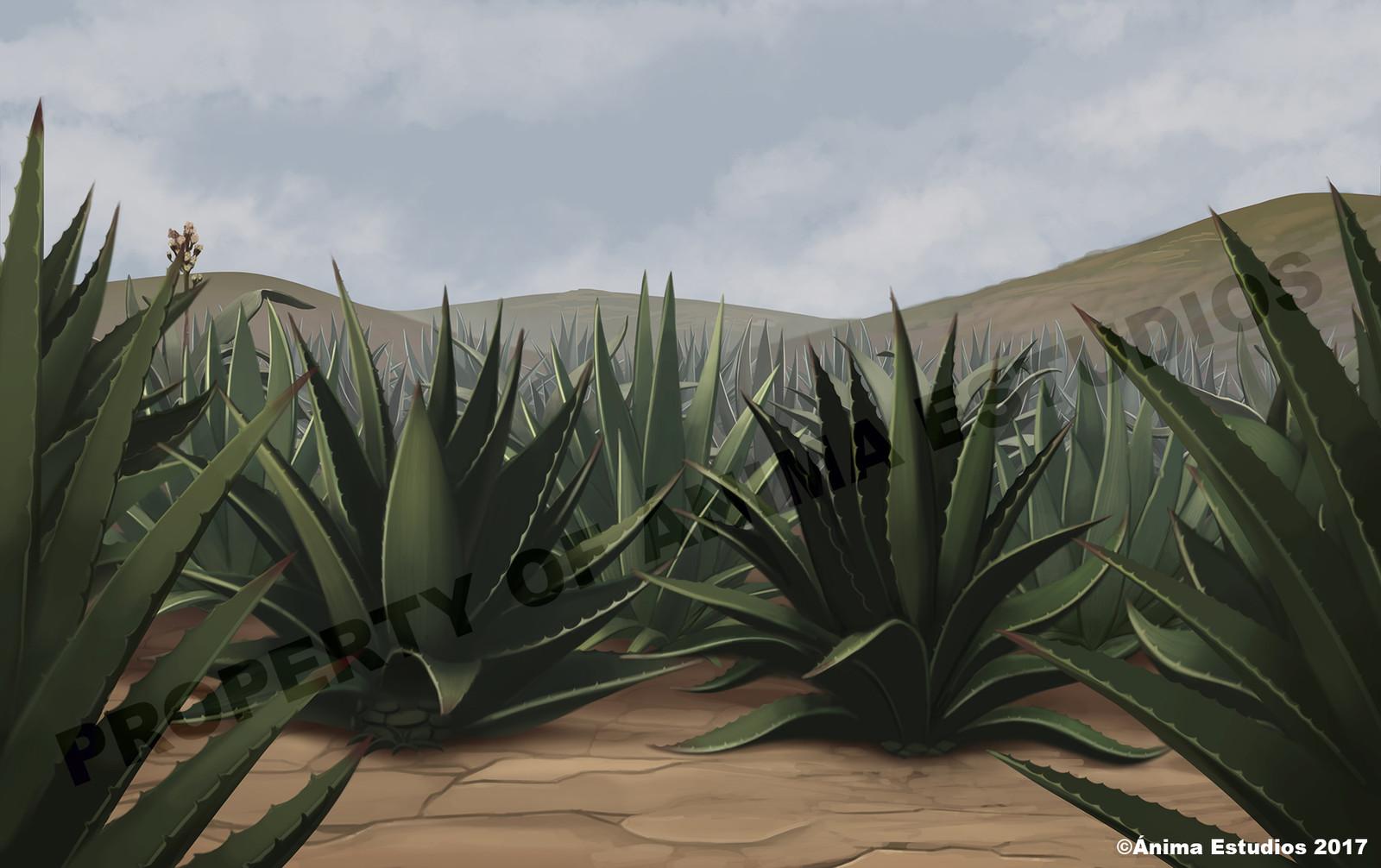 "The ""agave"" plantation."
