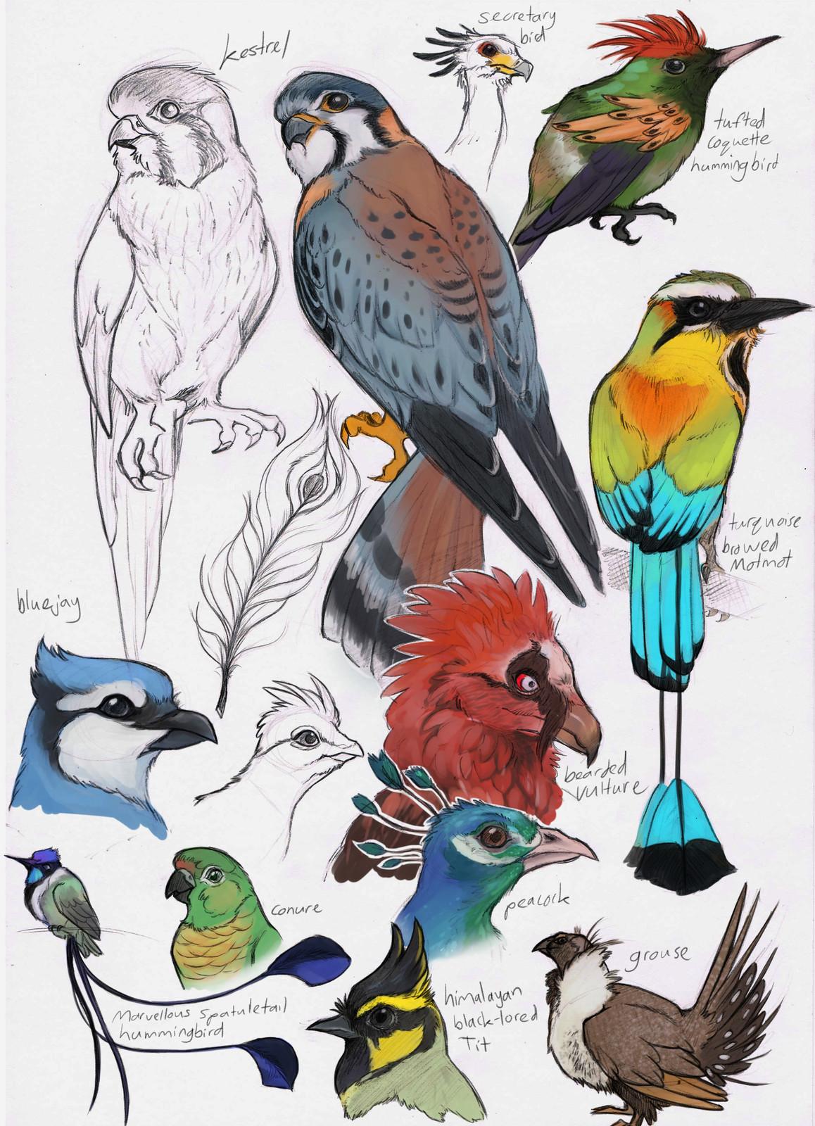 various bird studies from photos