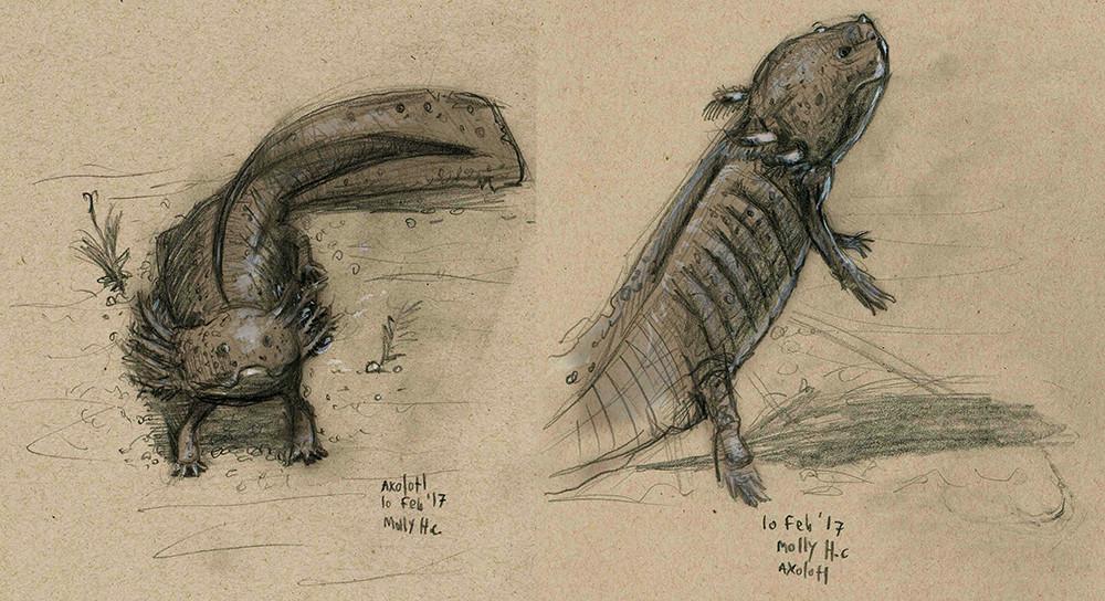 Pencil Axolotls