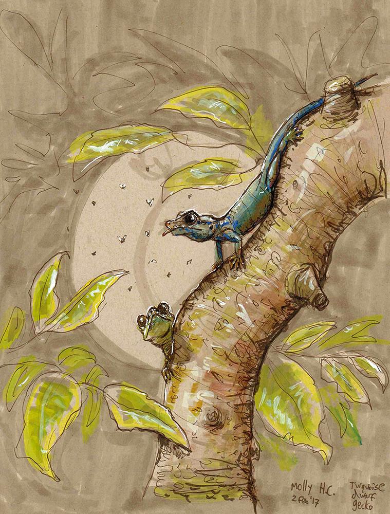 Turquoise Dwarf Geckos