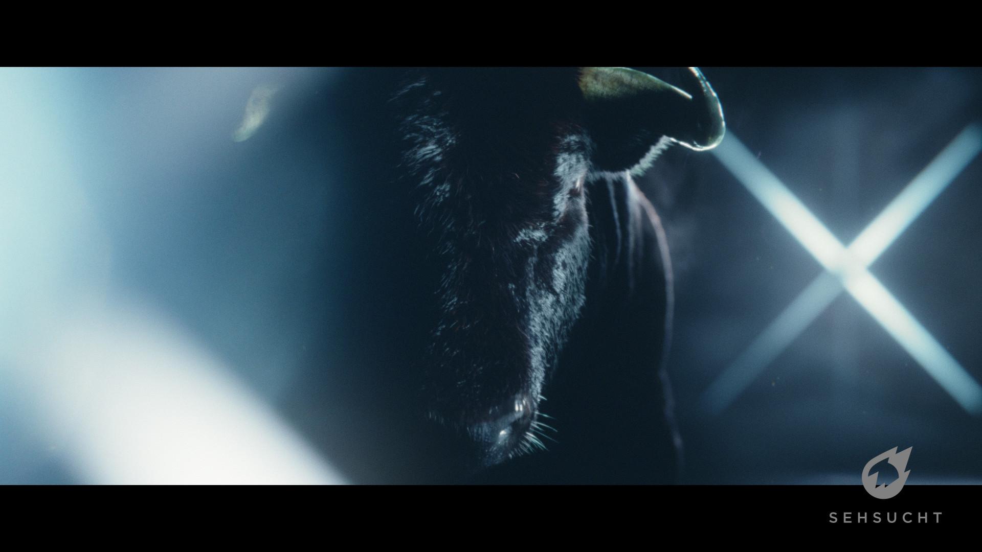 Thure koch bull 488