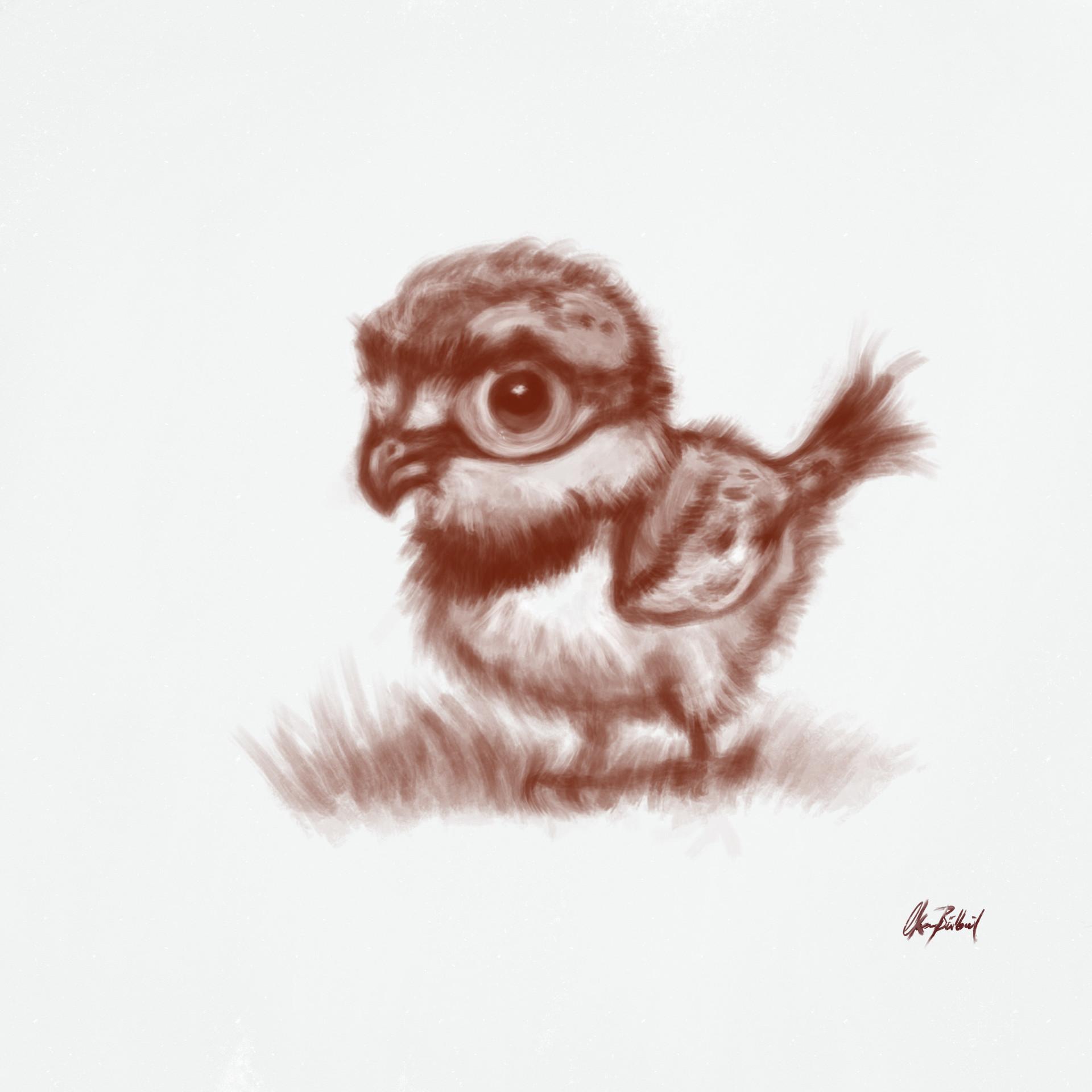 Okan bulbul fluffybird01