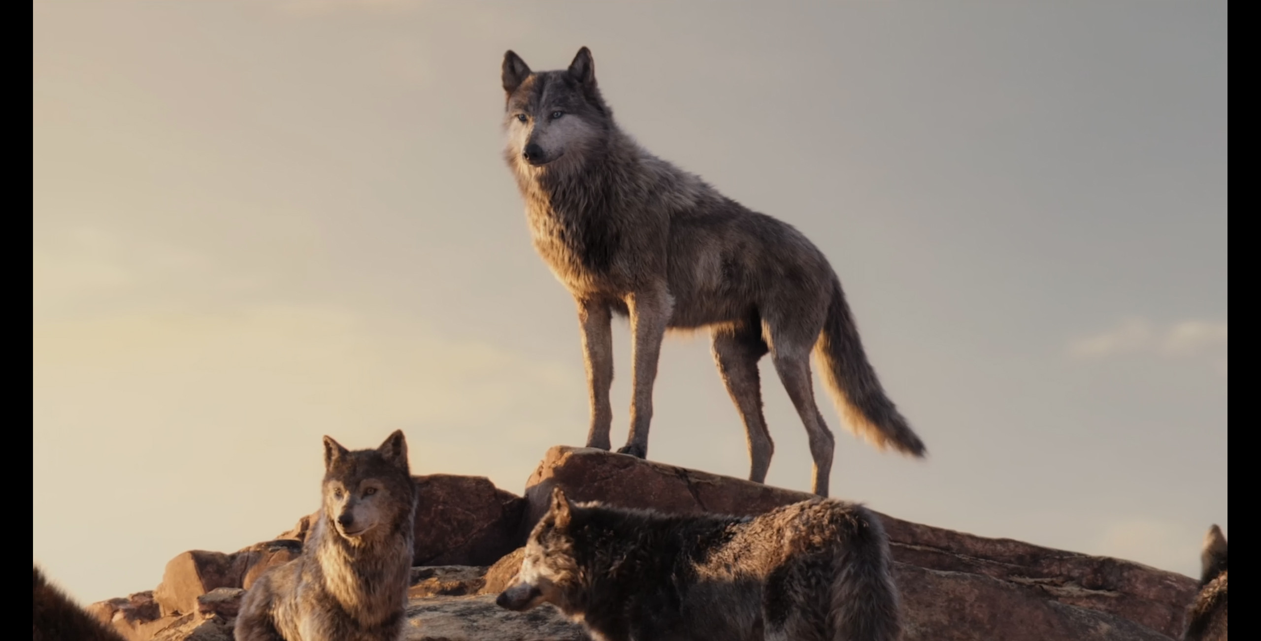 two secondary wolves fur