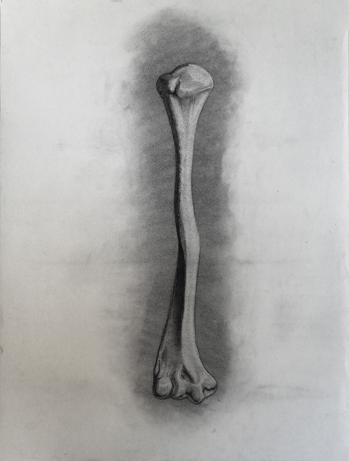 """Numerous Anatomy"" - charcoal on paper. Drawing from a live human bone"