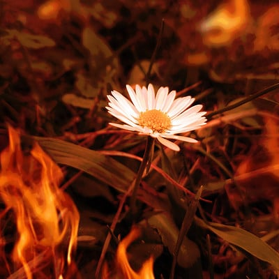 Angeleen tan daisy on fire small