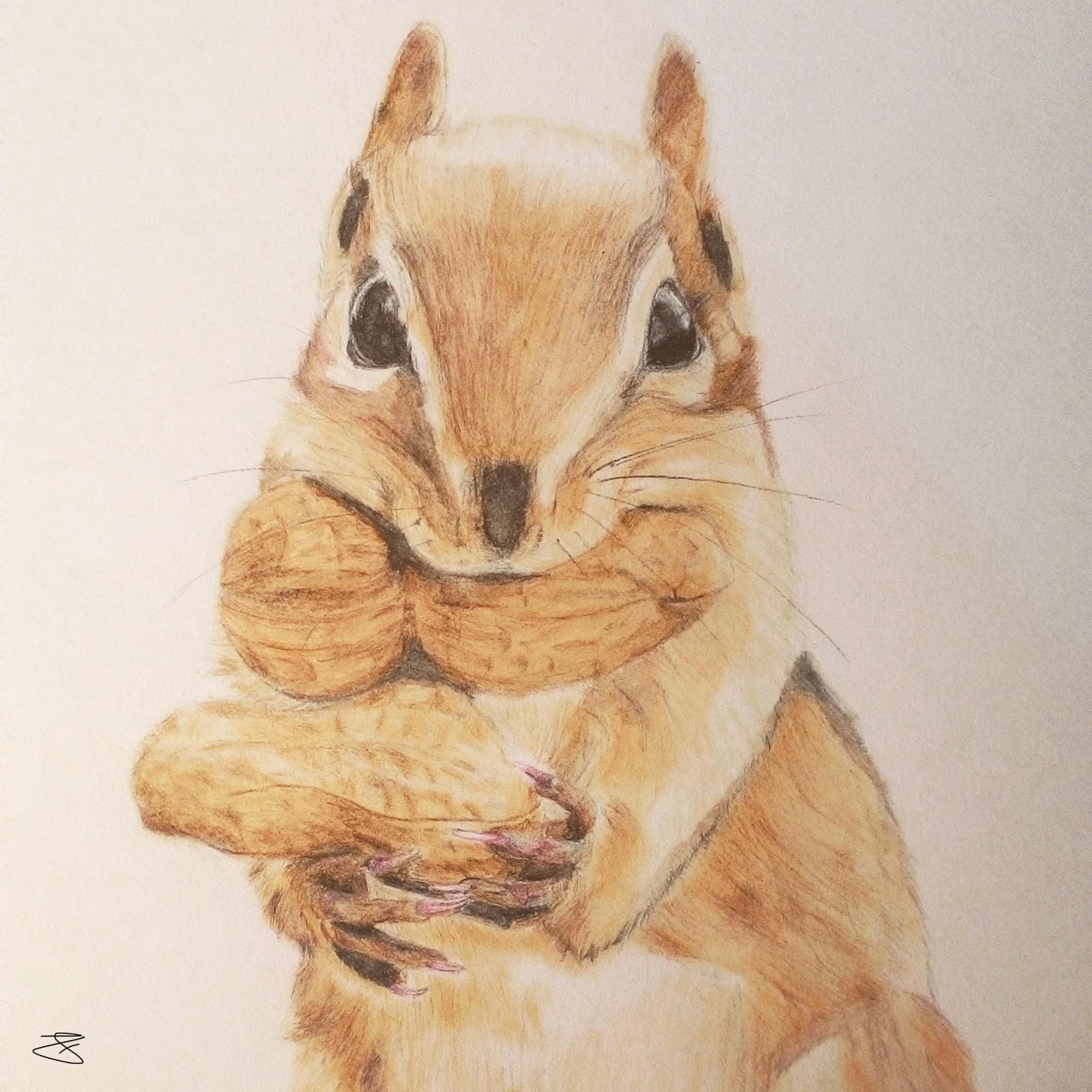 Squirrel Watercolor Pencils