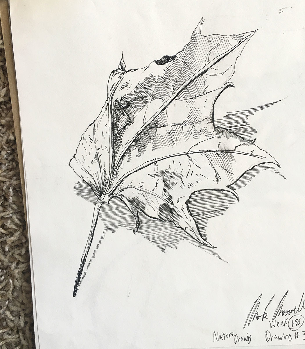 "8"" x 10"" sketchbook study of a leaf."