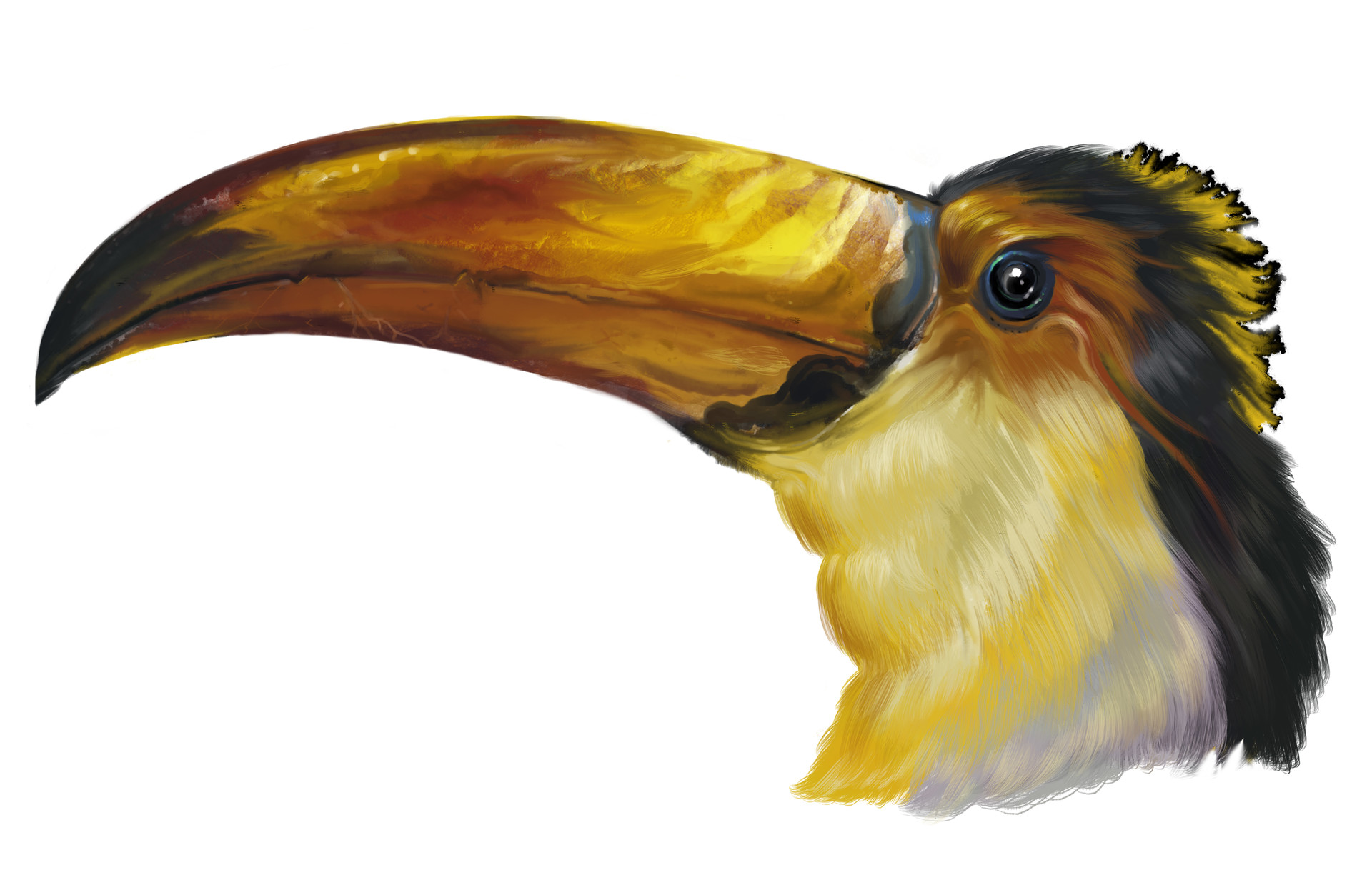 Josiah herman bird only toucanpainting