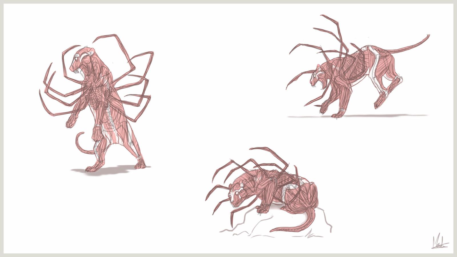 Sheet 2 - muscles