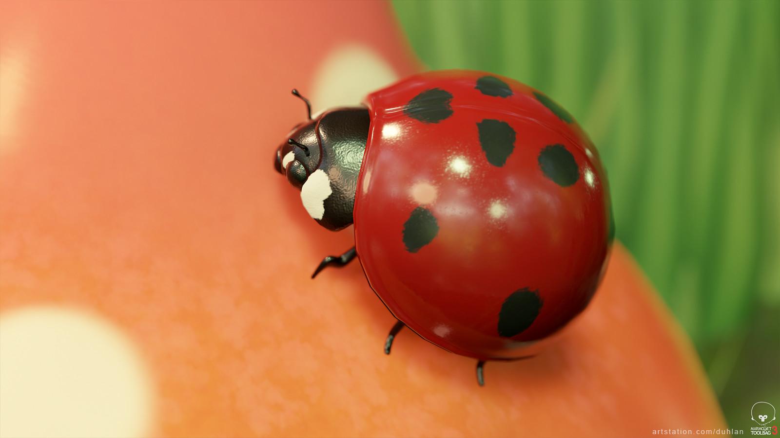Dylan young ladybug 01