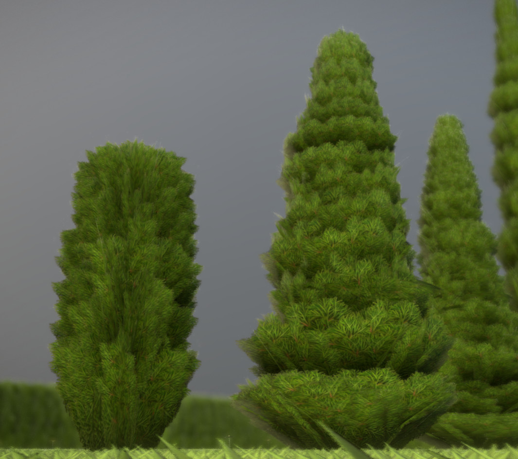 Some cypresses in different sizes.