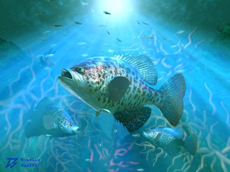 Wieslaw budzik fish