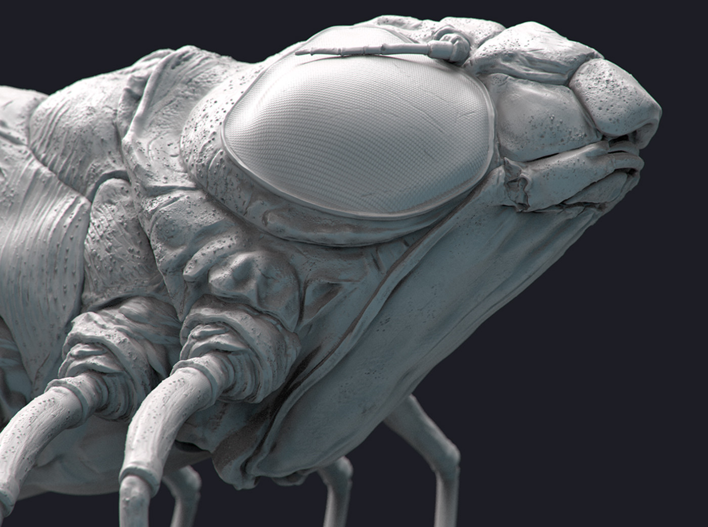 Dragonfly Nymph Grey