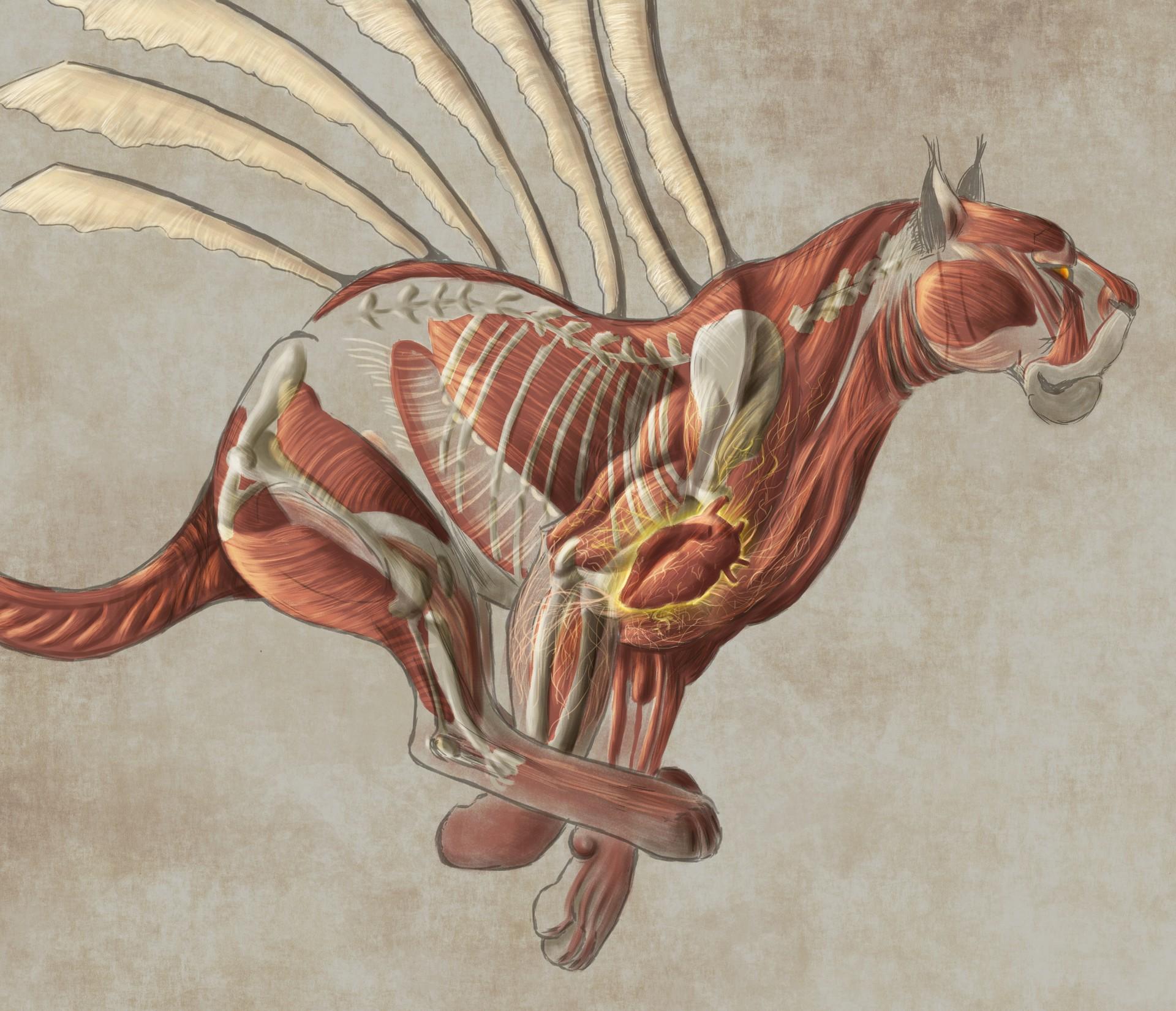 Patrycja Przełucka - The Muscle Study of a Fantastic Lion