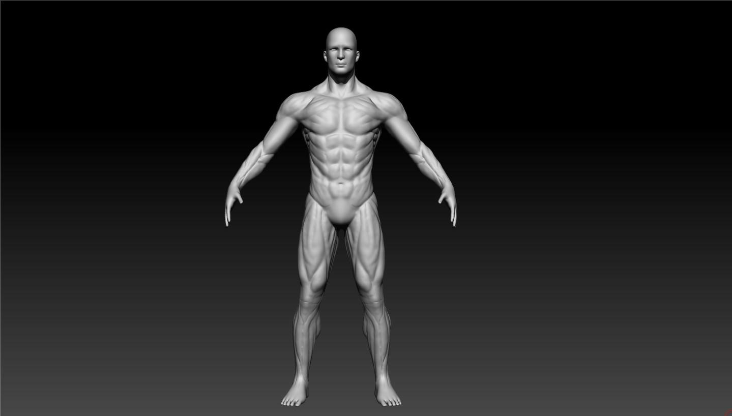 Alex Vazquez - Zbrush Anatomy Practice