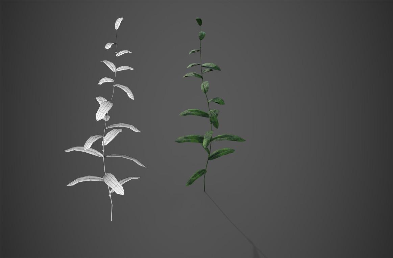 Seaweed asset