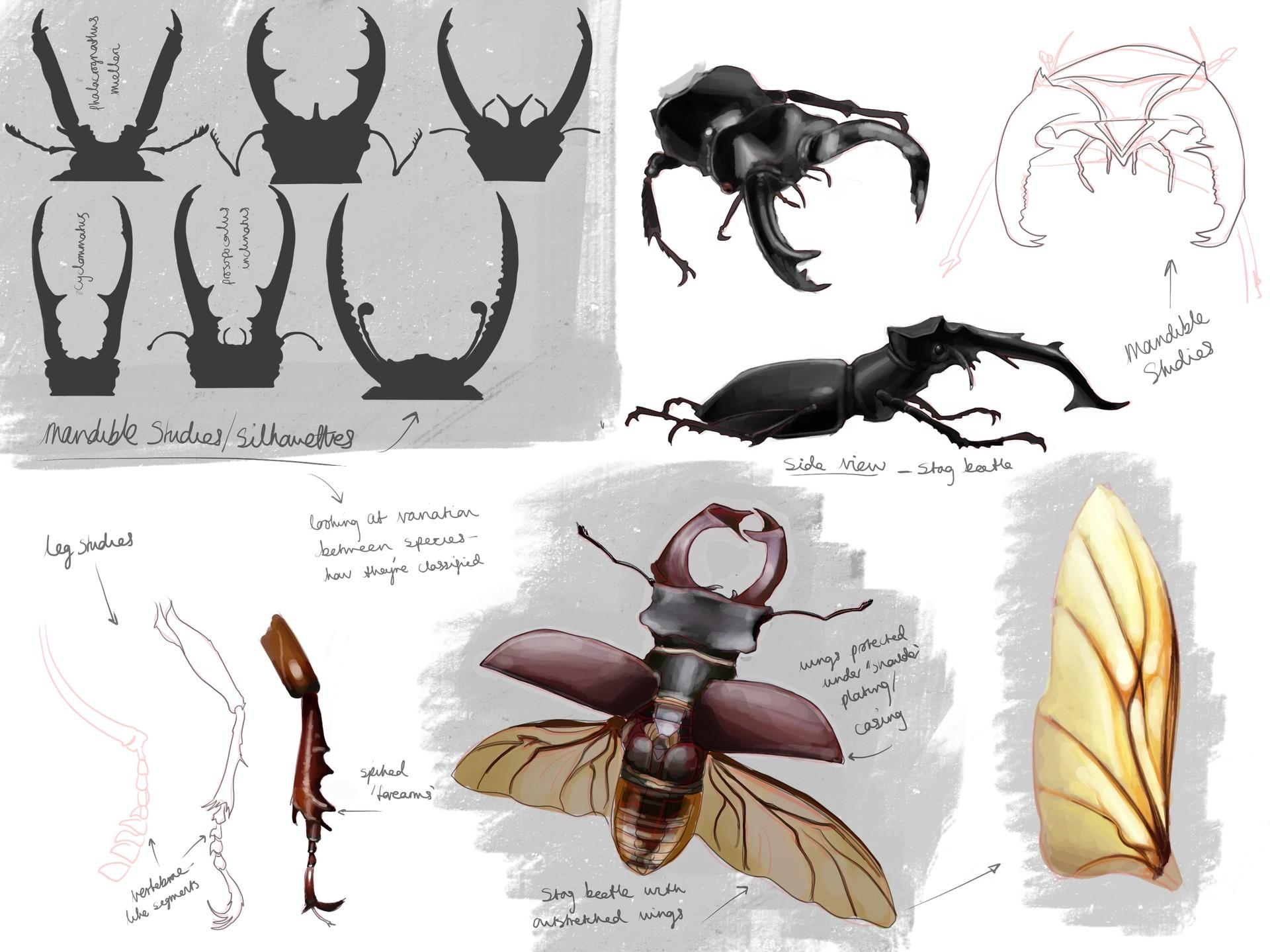 ArtStation - Insectoid design, Anoush Stanboulian