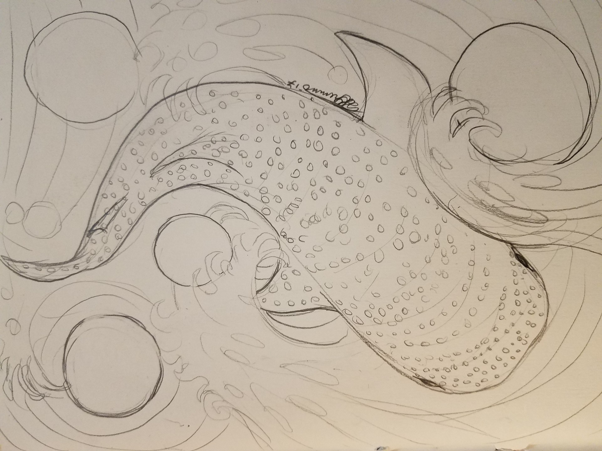 Teri grimm celestial whaleshark close up sketch