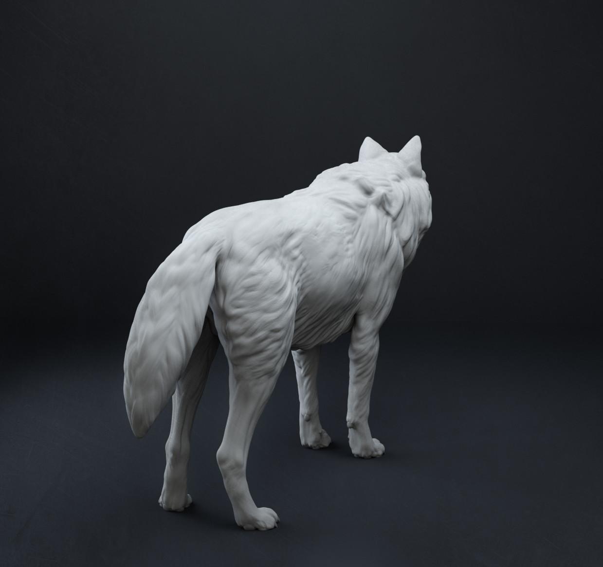 Sergei popovichev wolf5