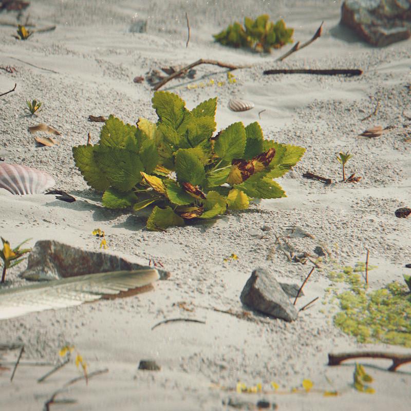 Beach Macro (Weekly CG Challenge #122)