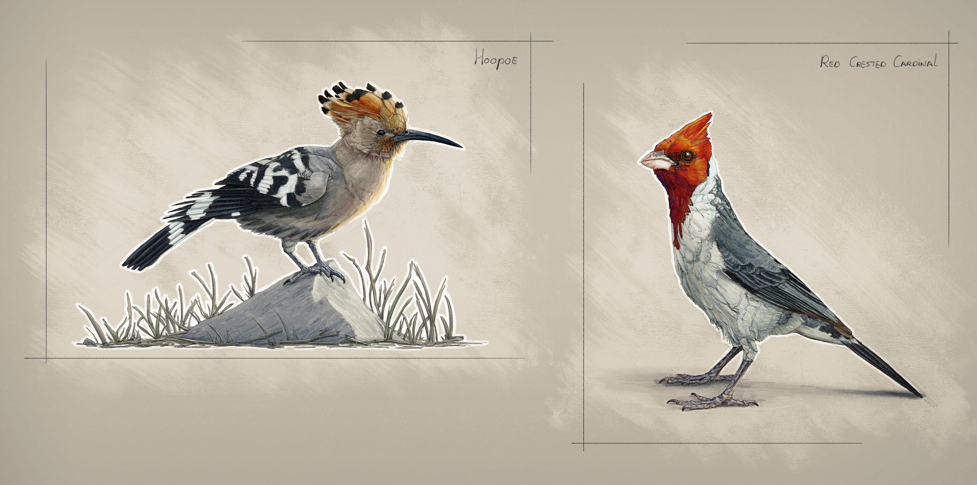 Jordi van hees lesson 3 animal observational sketches 2