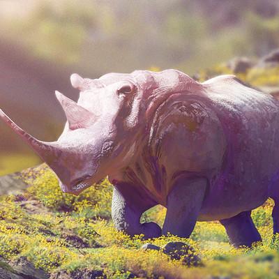 Silvia pasqualetto rhino