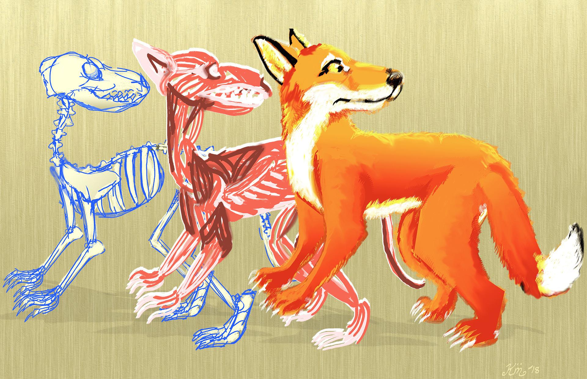 ArtStation - Idleness-Cartoon Fox Anatomy, Kate Mergener