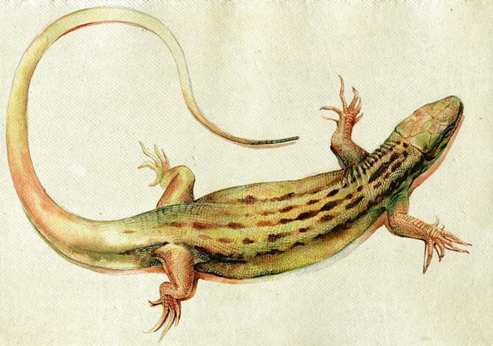Zoltan korcsok lizard