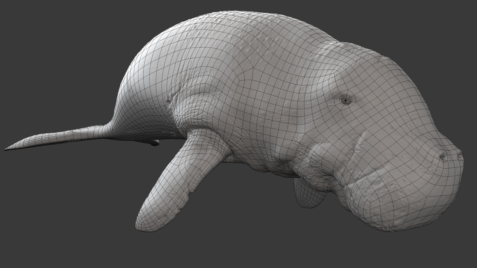 Carly glover dugong01 greywireframe