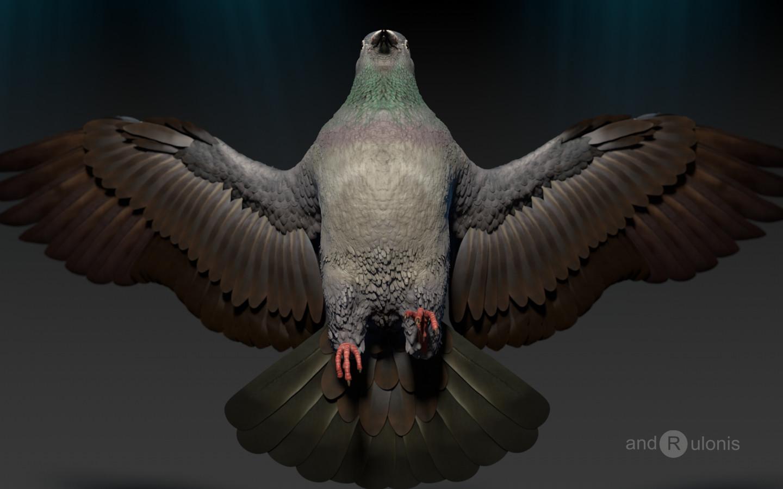 Dariusz andrulonis ptak 10