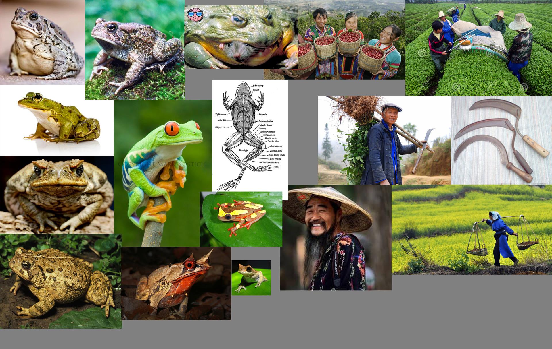 Pedro kruger garcia farmer frogs refs