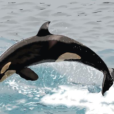 Andre smith killer whale low rez