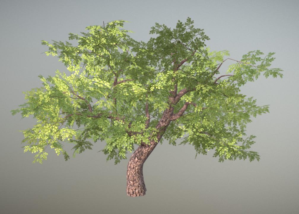 Jordan cameron tree