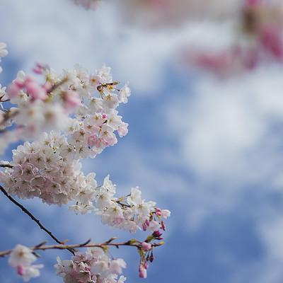 Reha sakar spring 041
