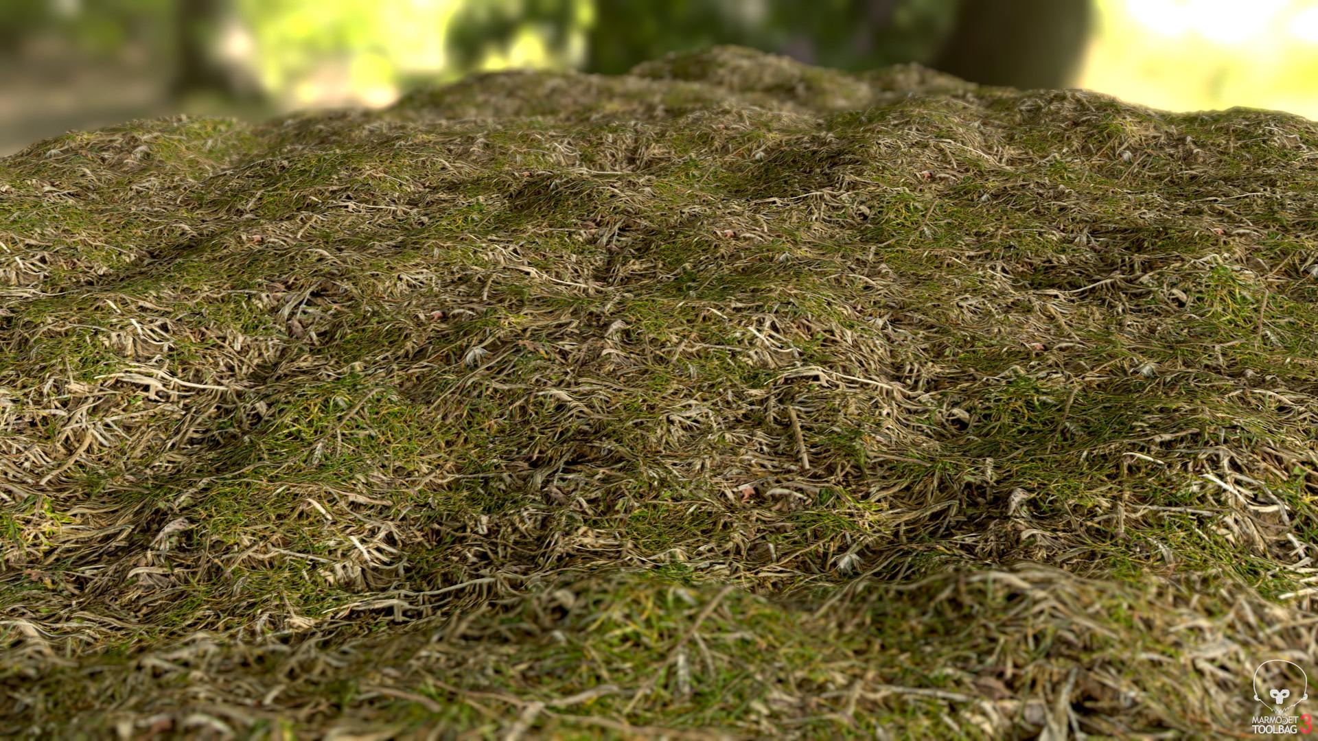 Dave riganelli grass2