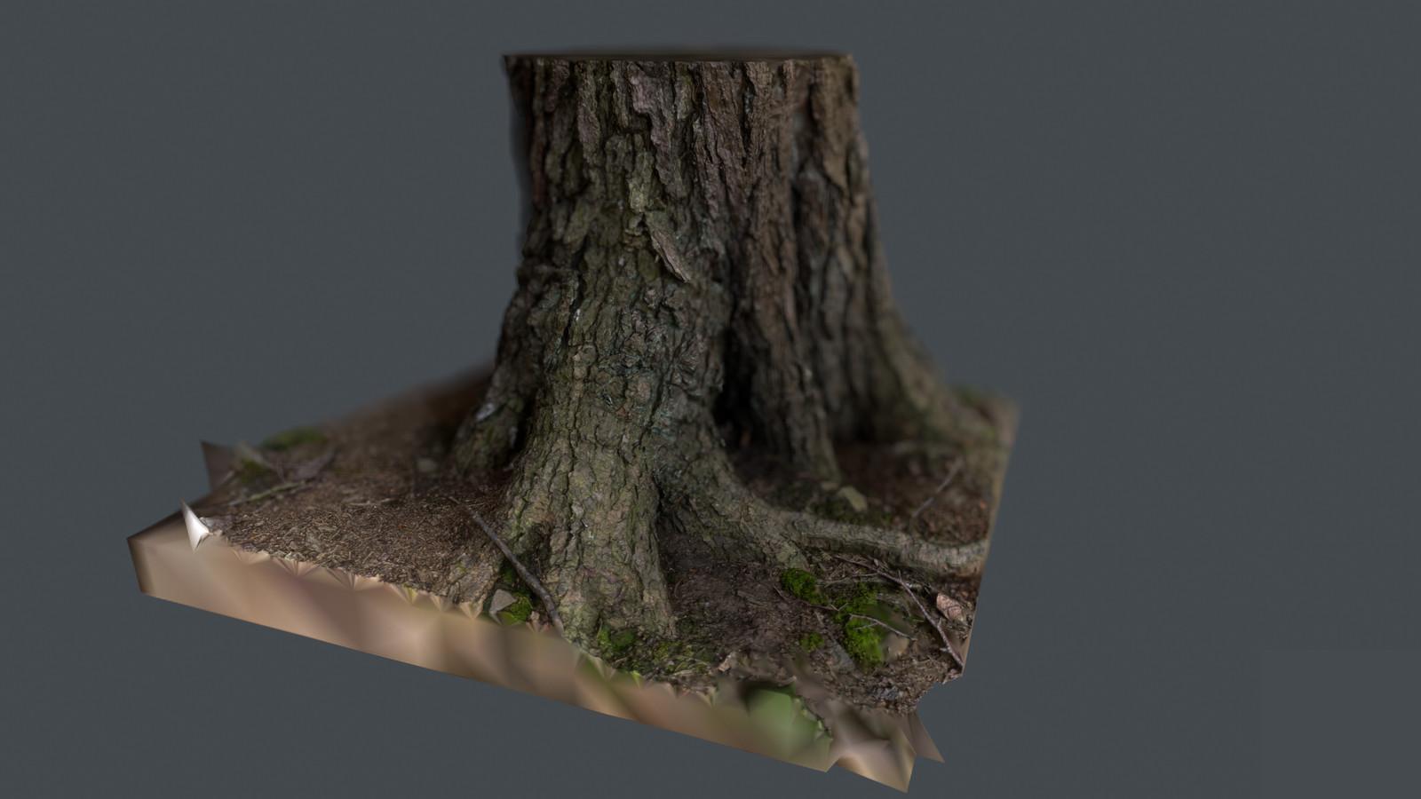 Scanned Pine Tree Trunk
