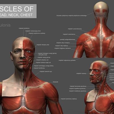 Dariusz andrulonis muscles 01