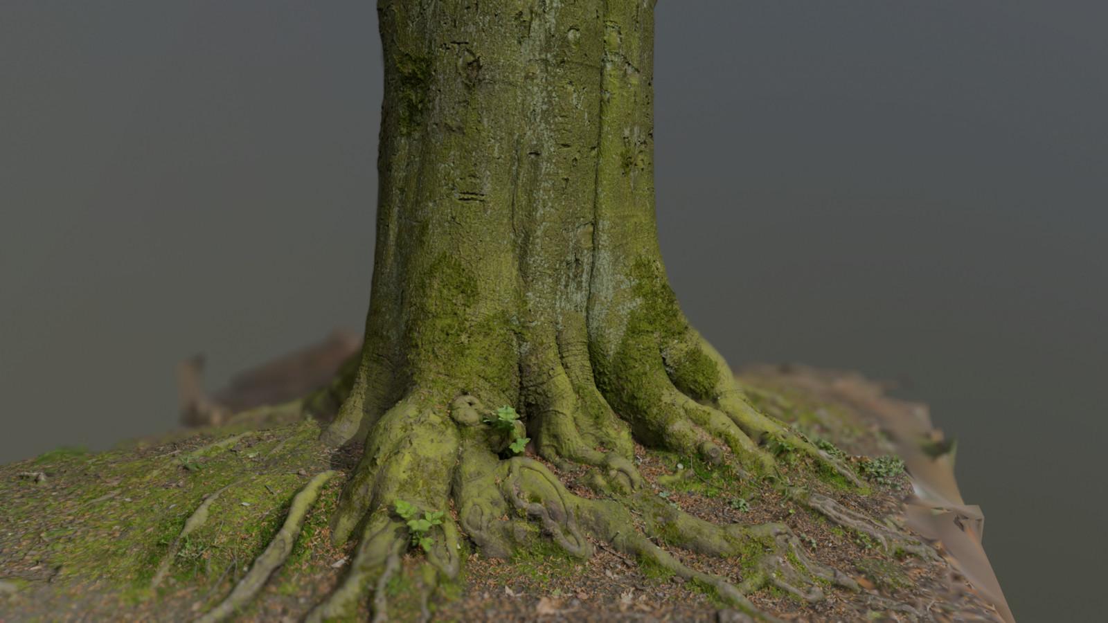 Big Tree Scan