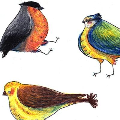 Zoe bergeret oiseaux