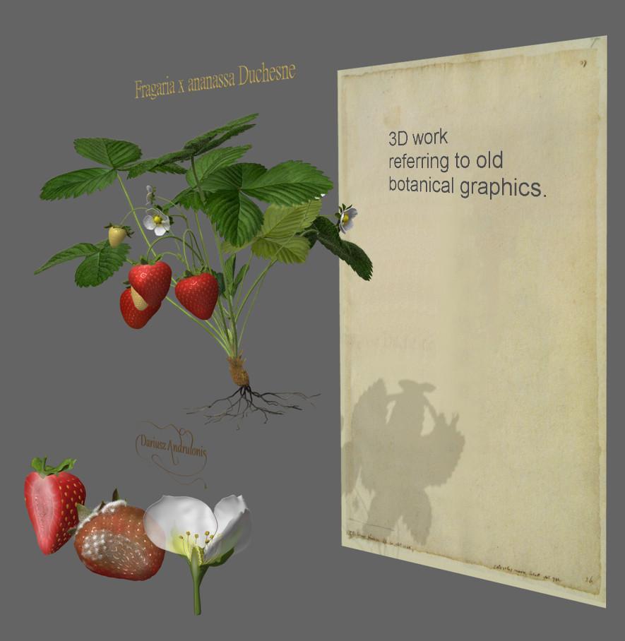 Dariusz andrulonis 02 starwberry