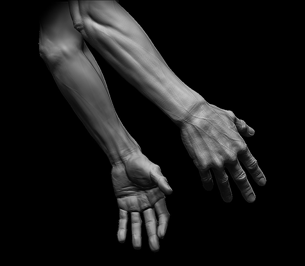 Highpoly sculpt arms and hands Zbrush