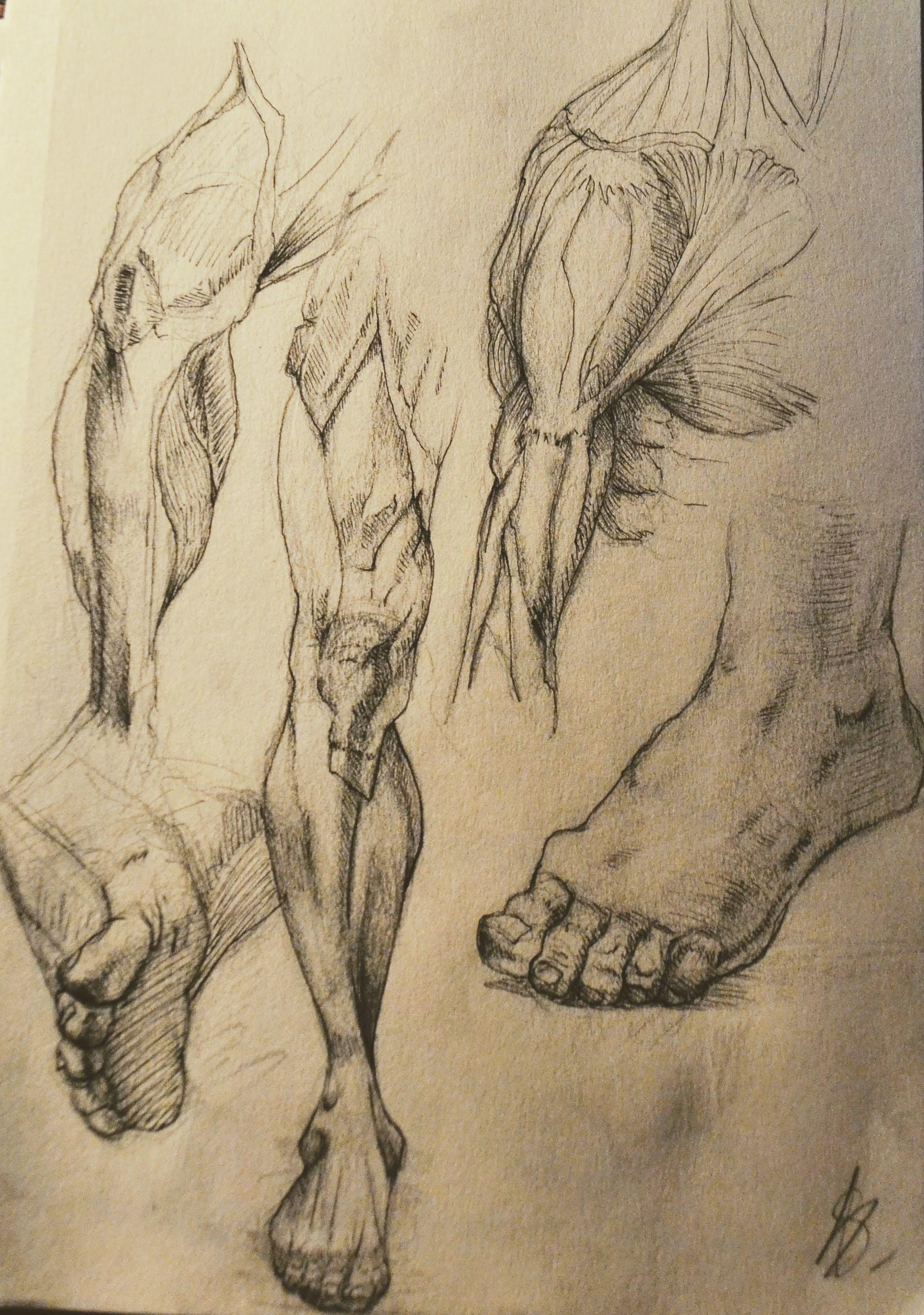 Sky Neko Feet Leg Shoulder Upper Arm Anatomy Studies Da Vinci