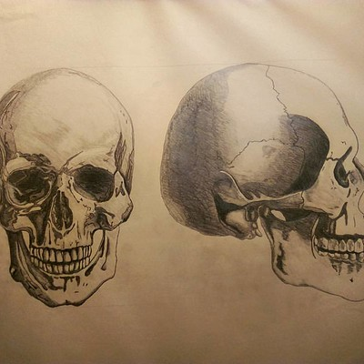 Nik causevig skull