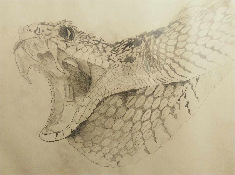 Snake Study