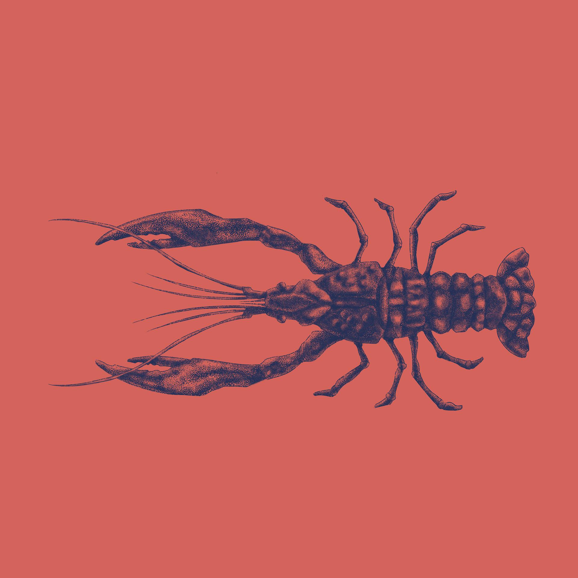 Marcos torres todos insta lagosta
