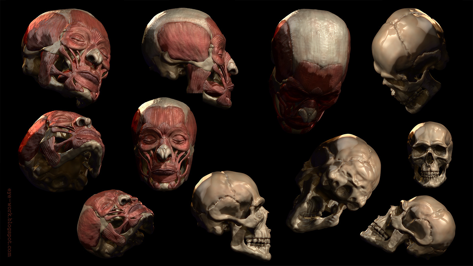 Anatomy Study - Head